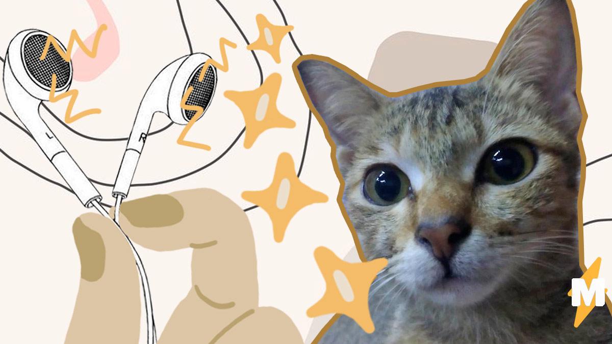В Індонезії кіт погриз навушники хазяїна, але швидко виправився і приніс йому дивну заміну (ФОТО)