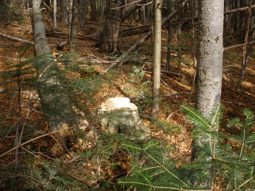 На території Рогатинського лісгоспу виявили незаконну рубку лісу. Збитки оцінили у понад мільйон 200 тисяч