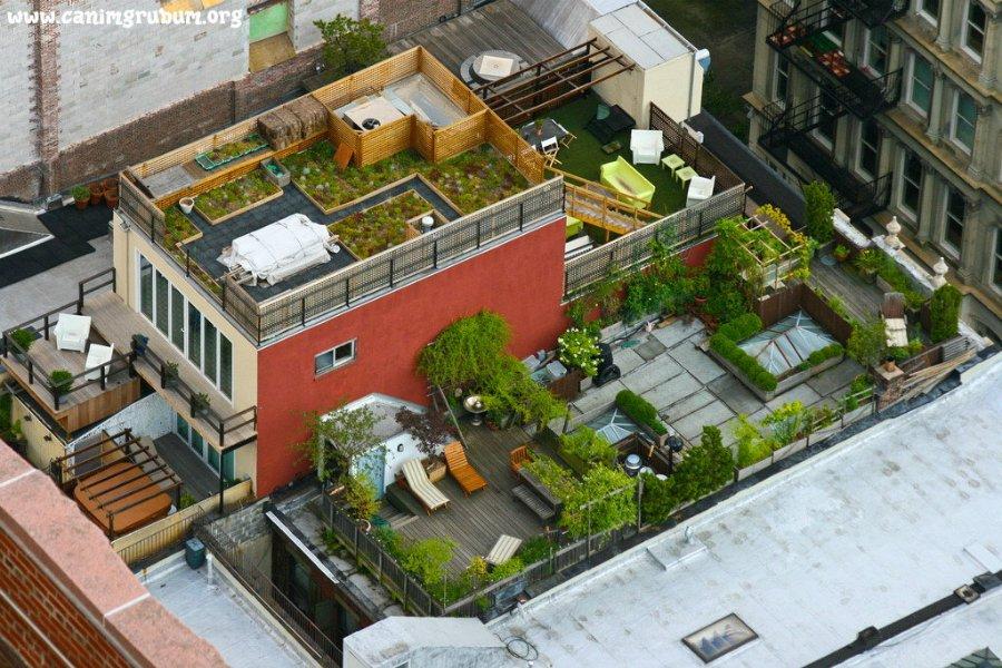 Екобруківка та зелені дахи: у Франківську хочуть по-новому боротися з дощовою водою
