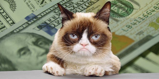 Померла легендарна кішка-мем Grumpy Cat