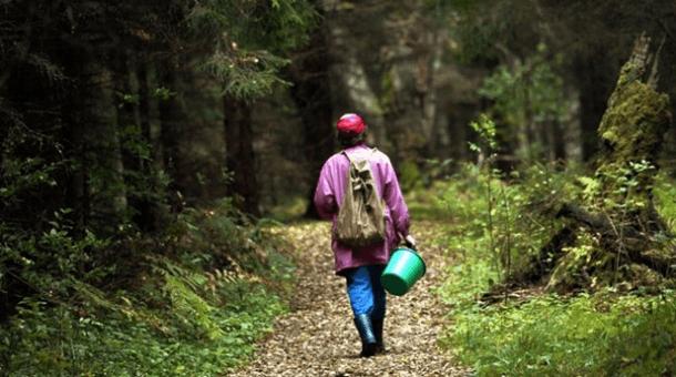 На Городенківщині у місцевого мешканця – отруєння грибами
