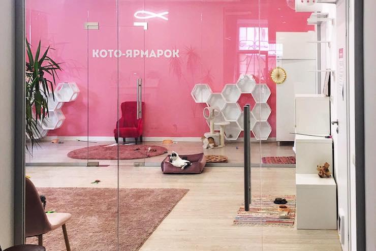 У Києві відкрили Центр кототерапії (ФОТО)