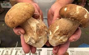 Як не отруїтися грибами: поради прикарпатських фахівців