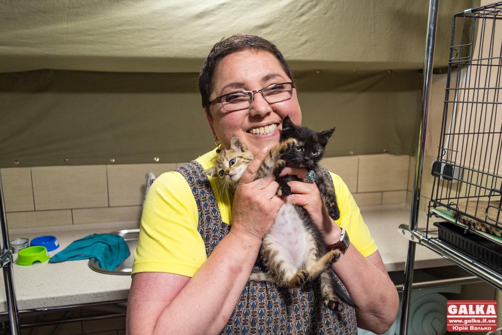 Тут доглянуть за вашою кицькою. Як працює перший хостел для котів «Пані Коцька» (ФОТО)