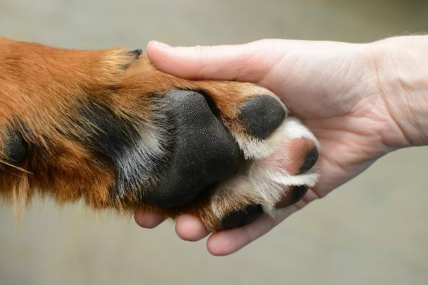 """""""Дім Сірка"""" просить про фінансову допомогу, аби продовжувати рятувати тварин"""