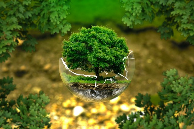 Світовий рекорд: в Ефіопії за день висадили понад 350 мільйонів дерев