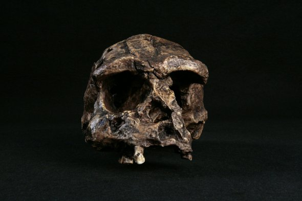 В Індонезії знайшли рештки найдавнішої людини