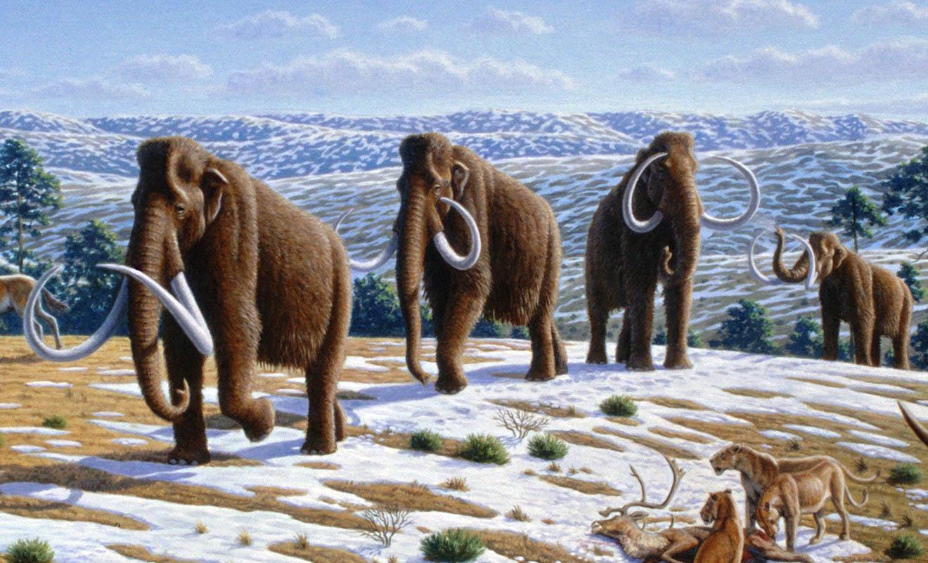Україна льодовикового періоду: сенсаційні знахідки на Прикарпатті (ВІДЕО)