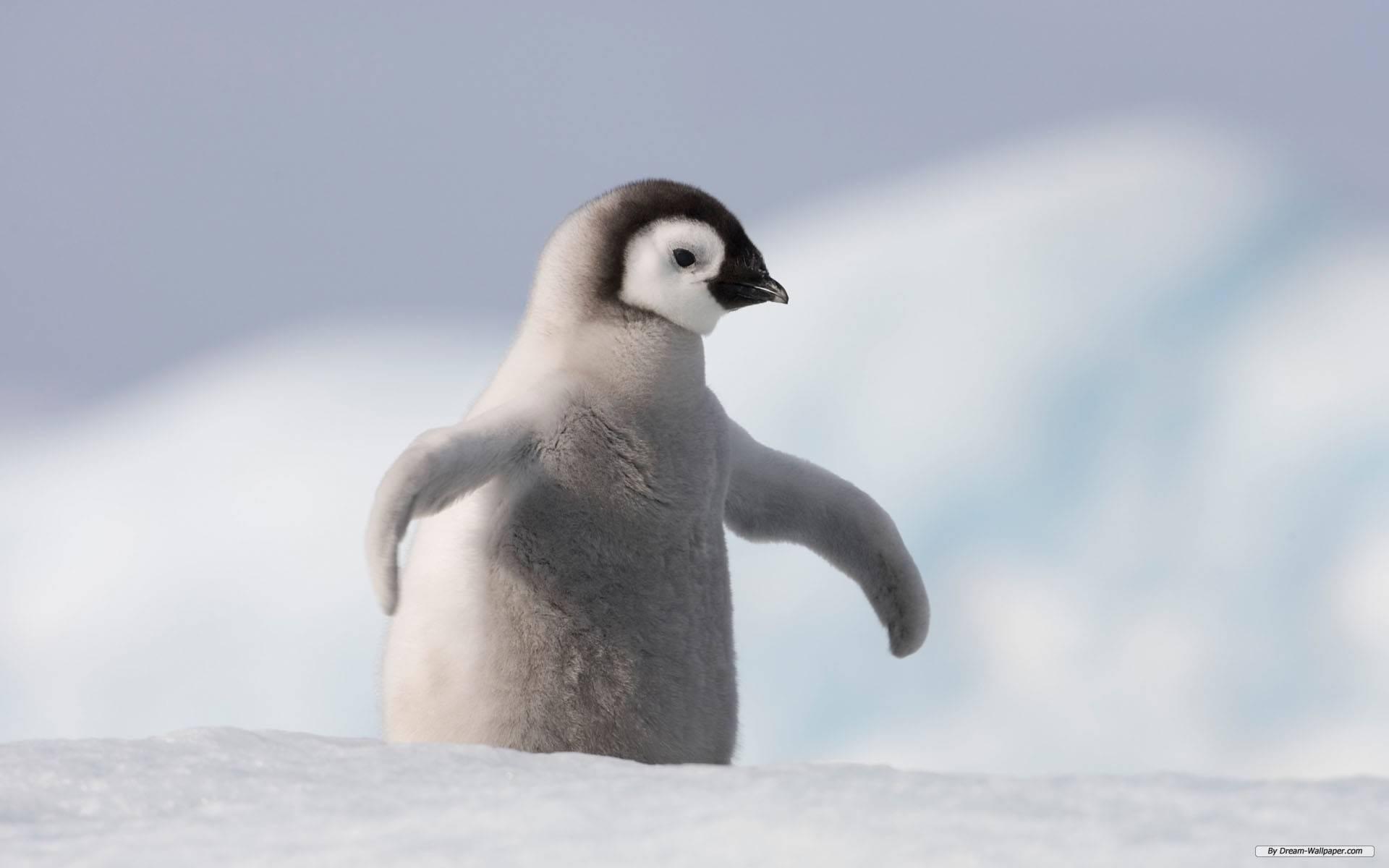 У Новій Зеландії двоє пінгвінів пробралися до суші-бару та сховалися на кухні (ВІДЕО)