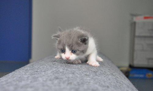 """Кошеня """"Часник"""" започаткувало еру клонування домашніх тварин"""