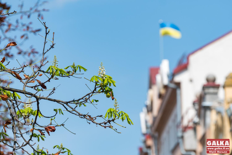 Відчули весну: в центрі Франківська знову розквітли каштани (ФОТО)