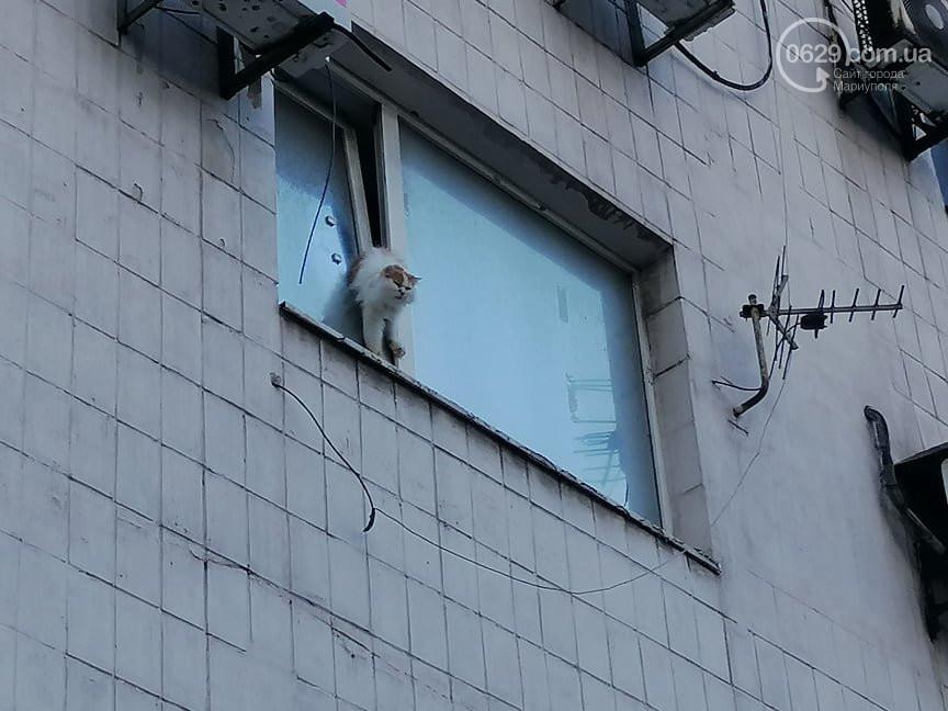 Калуські рятувальники допомагали кішці, яка застрягла у відчиненому вікні