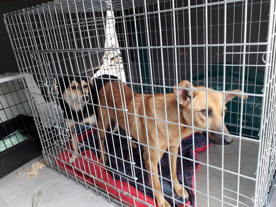 У Надвірній розпочали стерилізацію безпритульних тварин (ФОТО)