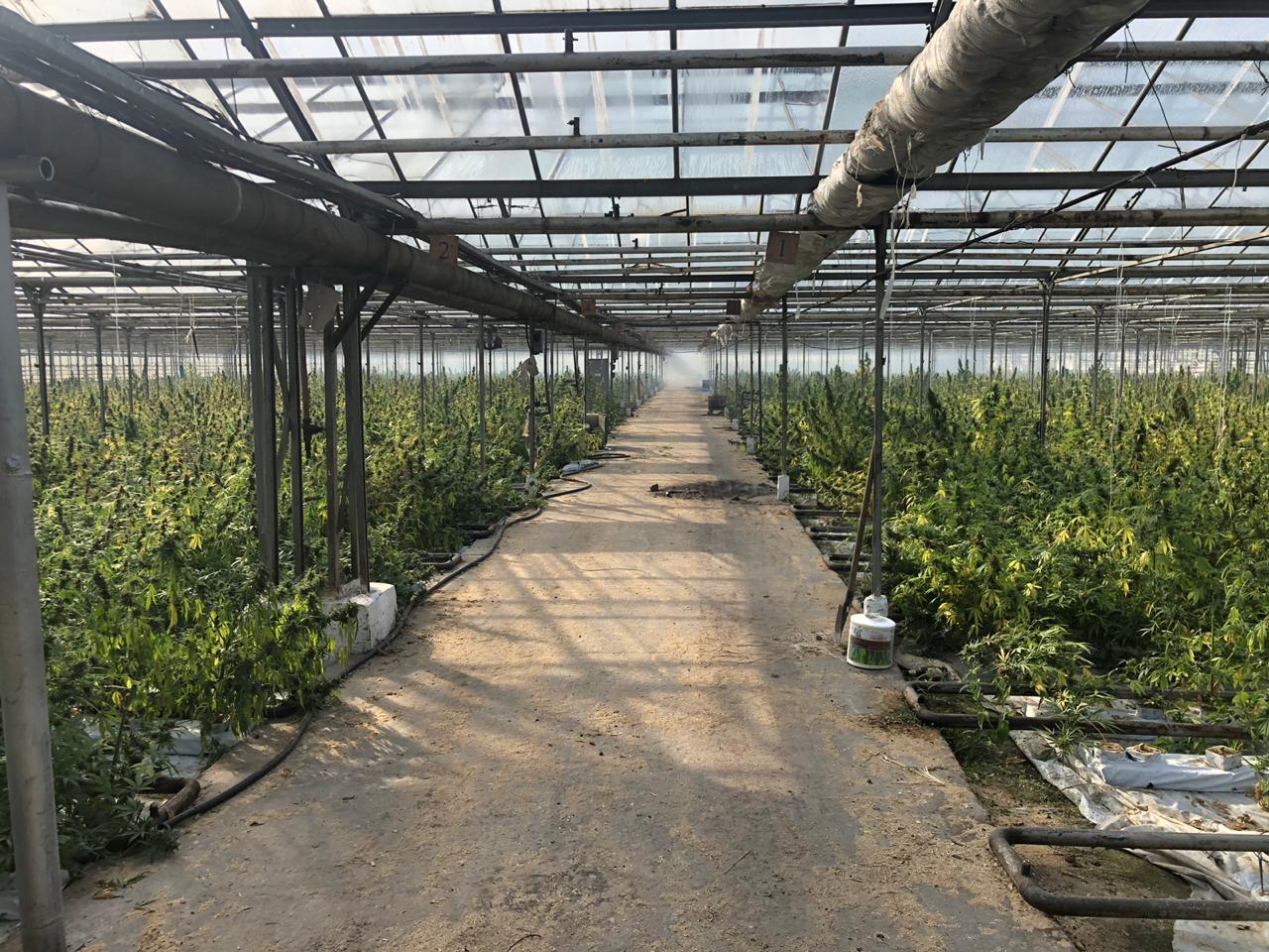 """""""Зроблено по фен-шуй"""": нардеп-садівник з Прикарпаття про вирощування марихуани у теплицях на Косівщині"""
