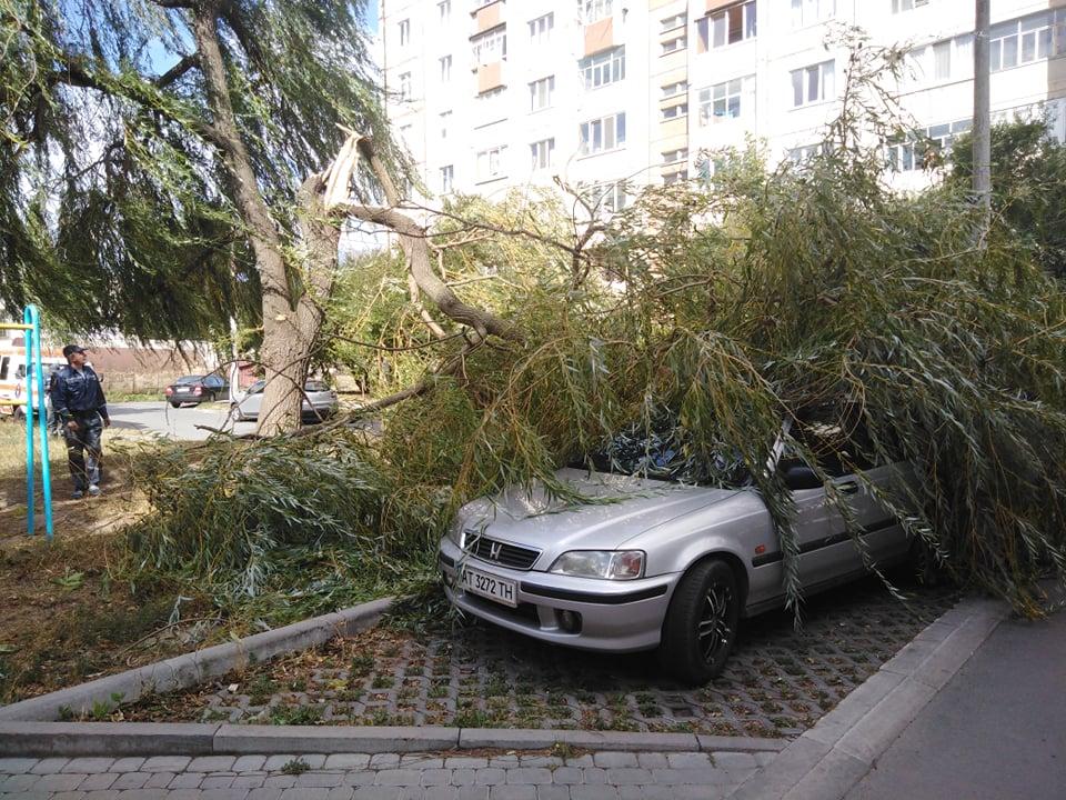 У Франківську вітер повалив дерево на Хонду (ФОТОФАКТ)