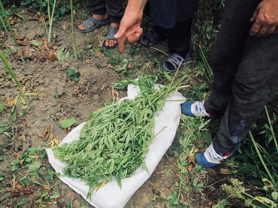 Прикарпатець виростив на власному городі 27 конопель (ФОТО)