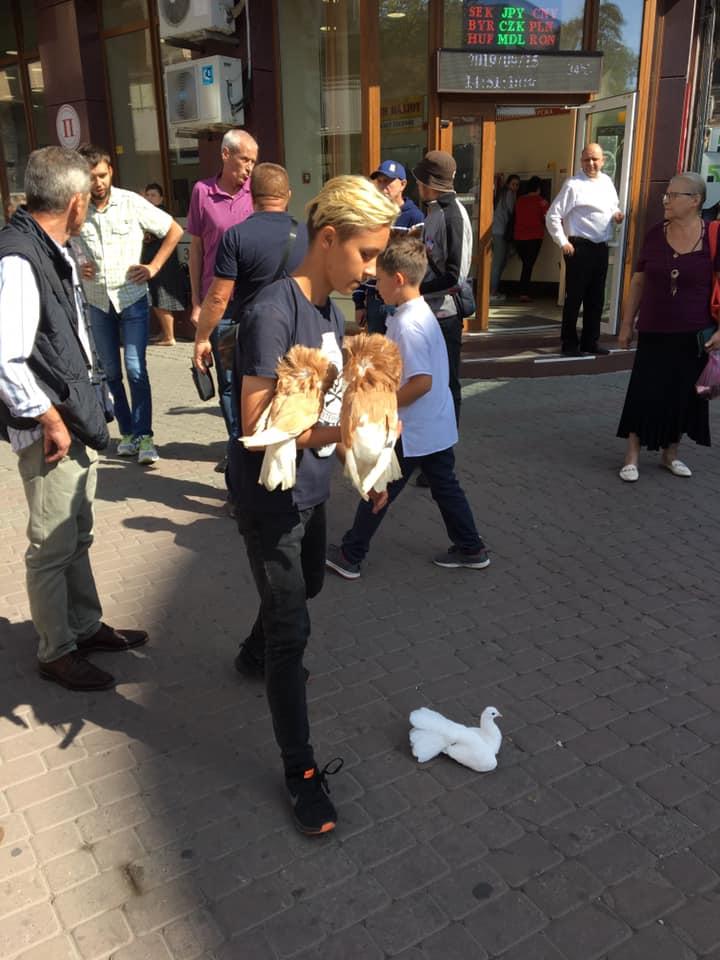 У Франківську вимагають заборонити фотопослуги з дикими тваринами та птахами