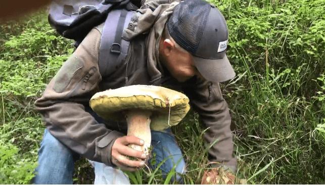 Велетенський білий гриб знайшли на Верховинщині (відео)