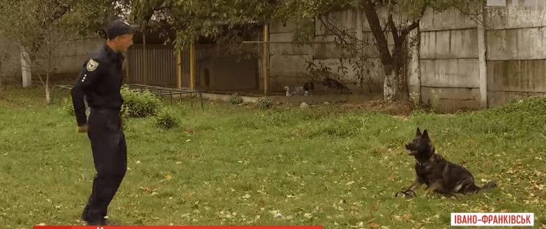 Як тренують найкращу службову собаку України з Івано-Франківська (ВІДЕО)