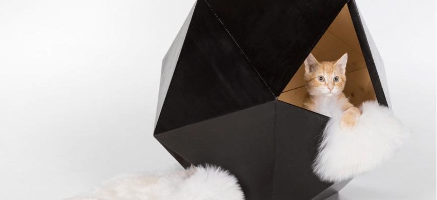 Американські архітектори створили з вуличних відходів будинки для котів (ФОТО)