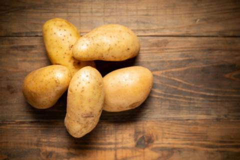Цьогоріч на Прикарпатті неврожай картоплі. В ОДА запевняють – людям вистачить (ВІДЕО)