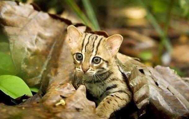 Мережу розчулила найменша кішка у світі (ВІДЕО)