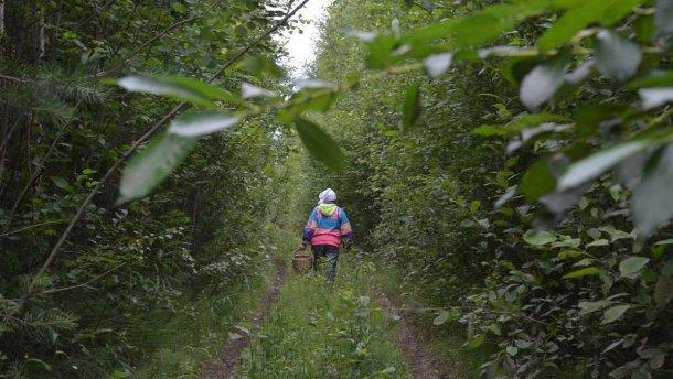 Прикарпатські рятувальники радять, як зробити прогулянку до лісу безпечною