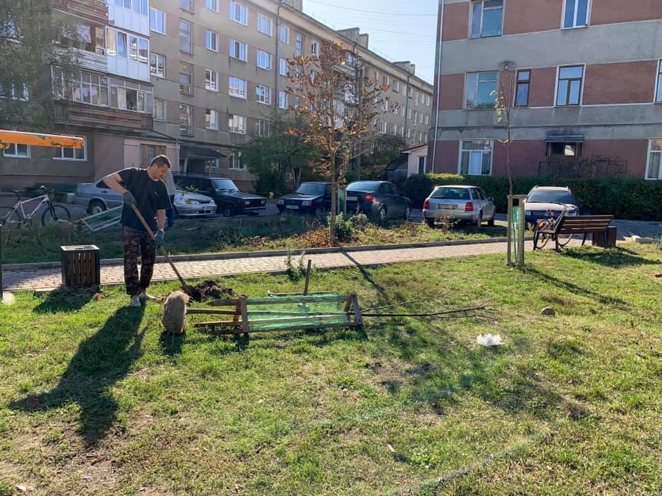 У місті висадять 160 нових дерев замість тих, що не прижилися (ФОТО)