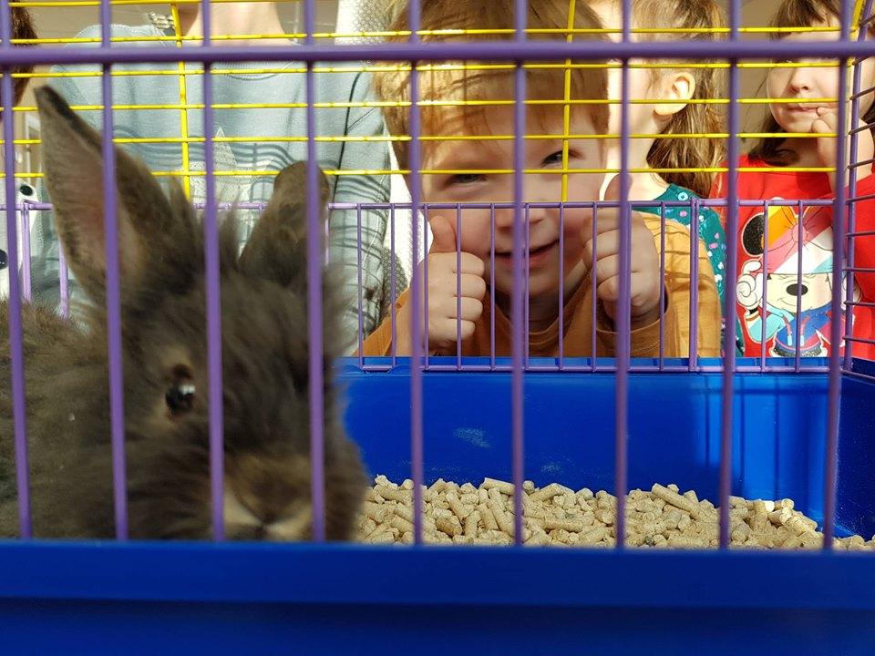 Кролика та черепашку отримав франківський дитсадок від мера (ФОТО)