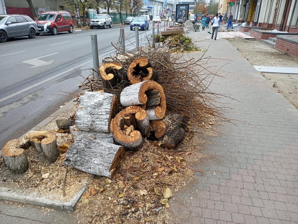 На вулиці Гузара зрізалип'ять аварійних лип – замість них висадять дуби (ФОТО)