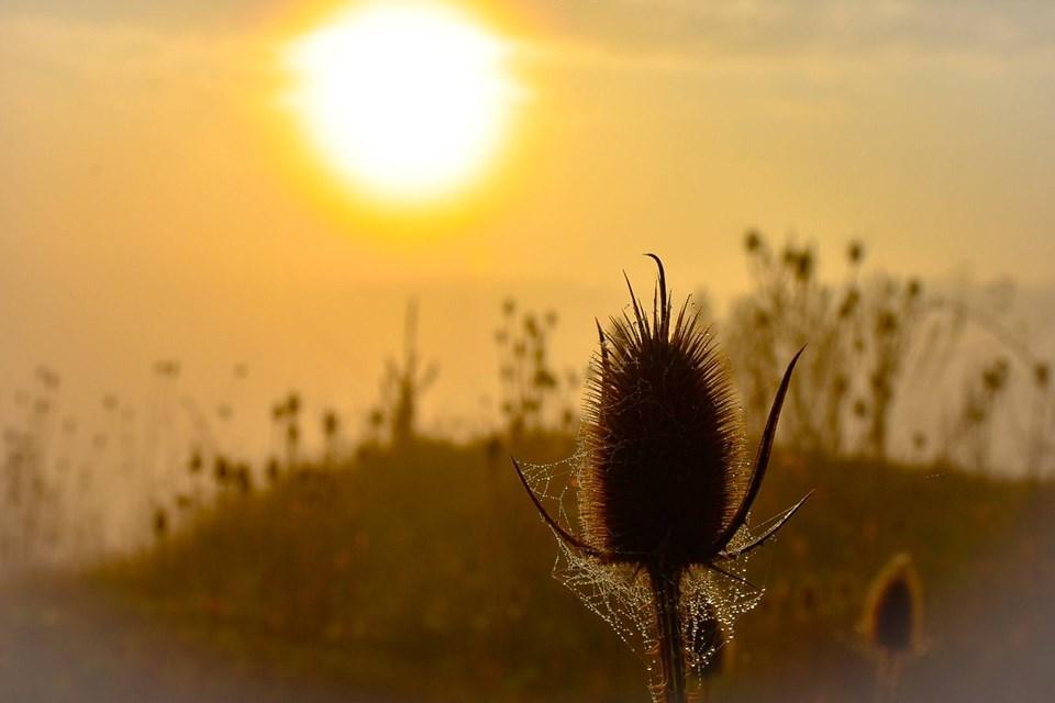 У мережі з'явилися неймовірні світлини осіннього ранку над Дністром (ФОТО)
