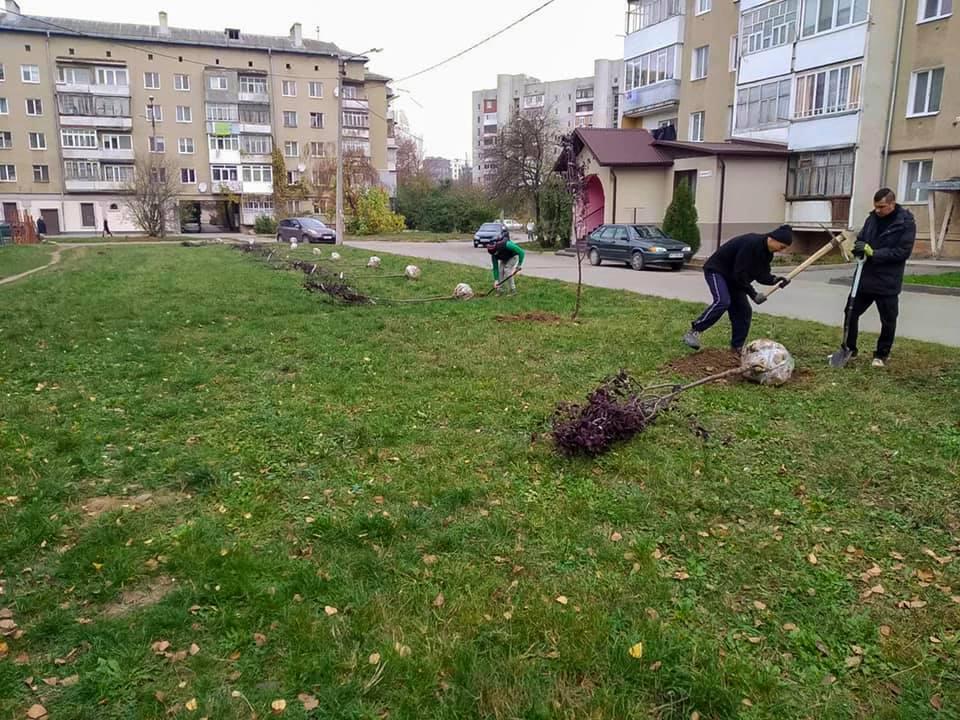 Цієї осені в місті висадять понад 300 дерев та дві тисячі кущів (ФОТО)