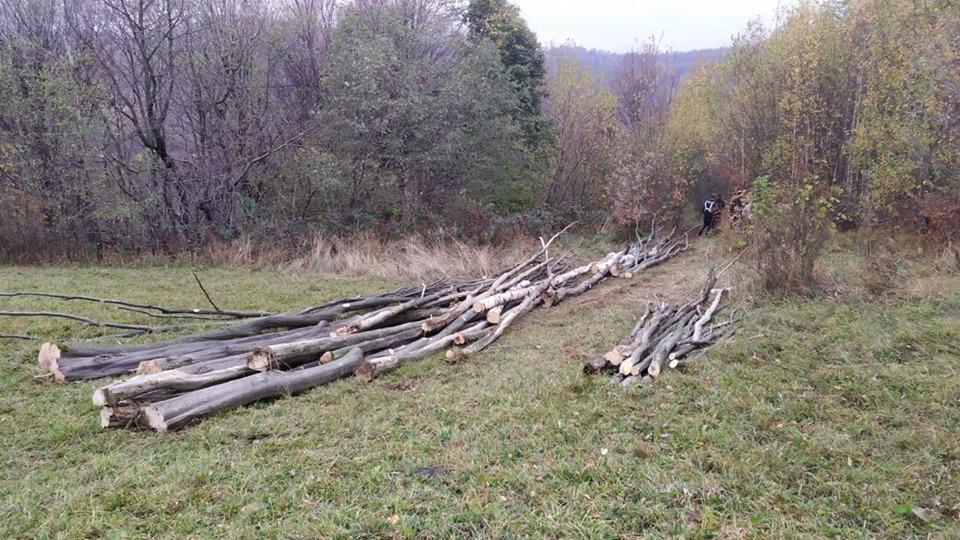 На Косівщині чоловік незаконно рубав ліс (ФОТО)