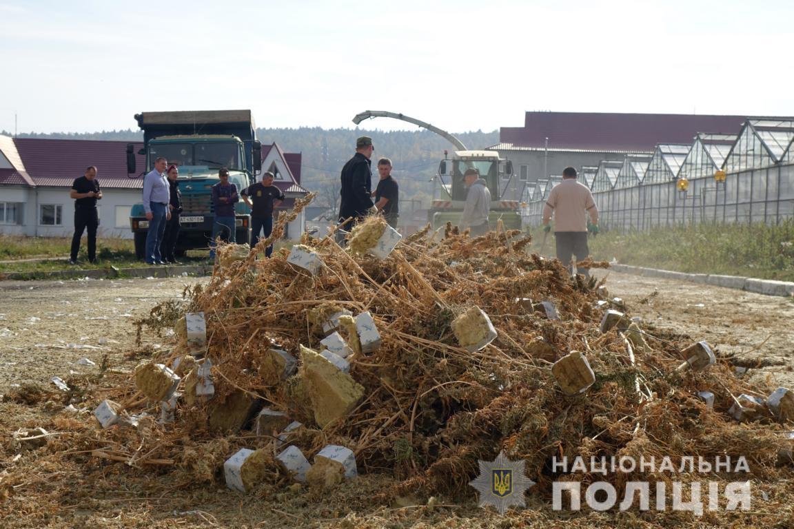 Поліціянти знищили виявлену на Косівщині рекордну плантацію коноплі (ФОТО, ВІДЕО, ОНОВЛЕНО)