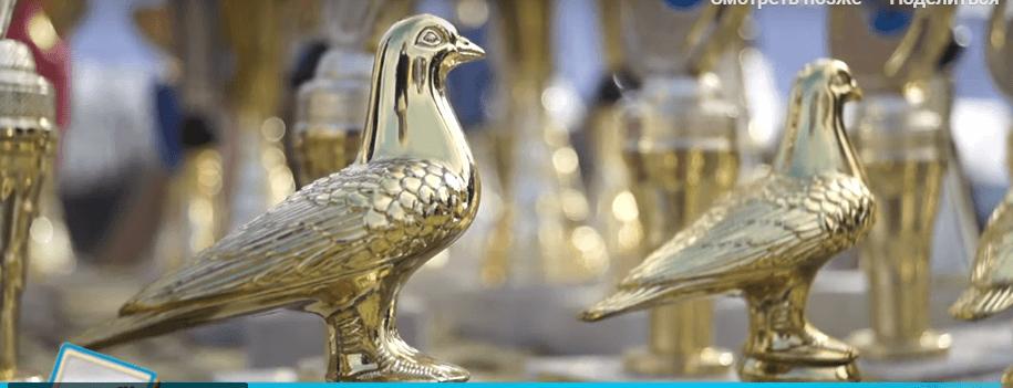 Кролі, павичі і коти: незвичний ринок влаштували у Коломиї (ВІДЕО)