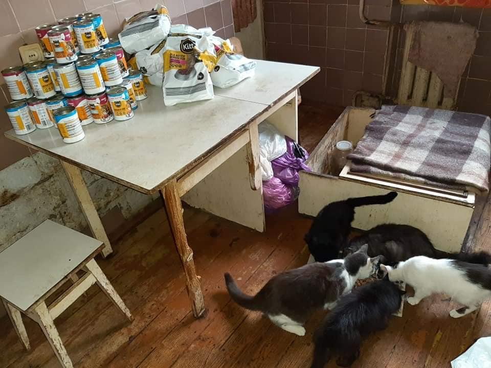 Бабуся з Франківська, яка прихистила 20 котів, отримала допомогу від небайдужих