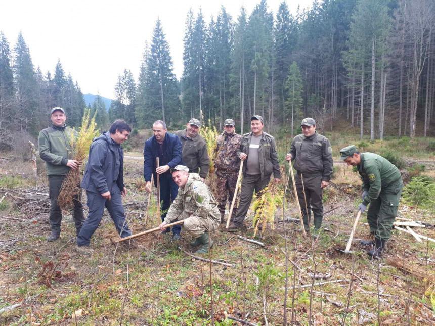 На Верховинщині бійці АТО разом з лісівниками висадили молодий ліс (ФОТО)