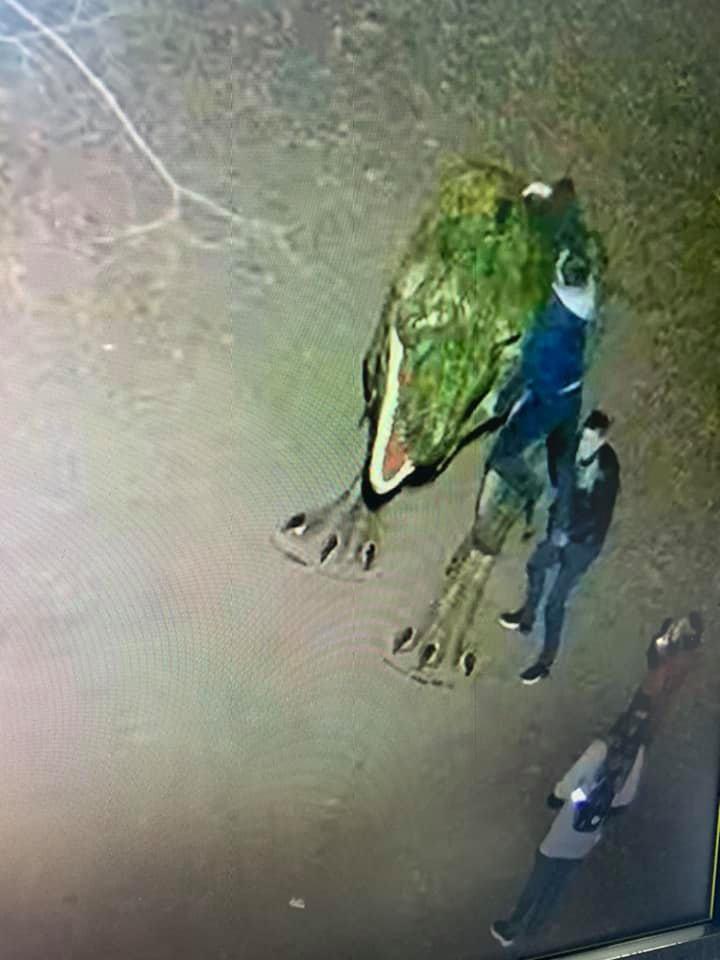 У мережі опублікували фото кривдників динозавра