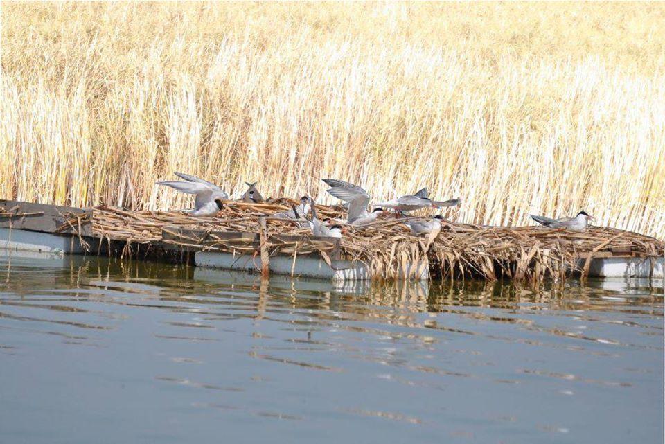 """На Бурштинському """"морі"""" створять штучний острів для птахів – прикарпатців кличуть допомогти"""