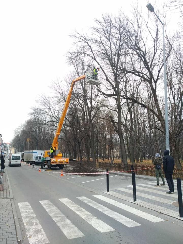 У франківському парку зрізають аварійні гілки (ФОТО)