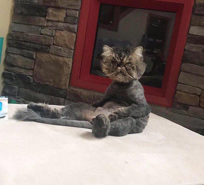 Розучилися сидіти: показали кумедних котів у незвичних позах (ФОТО)