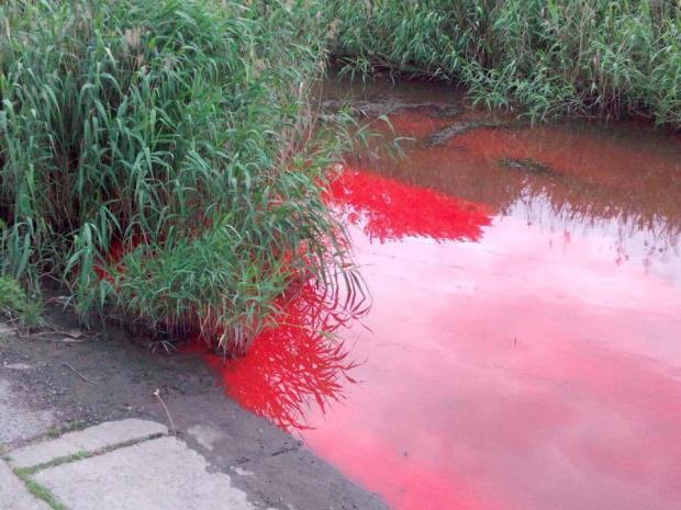 У Калуші почервоніла річка – спецкомісія шукала джерело забруднення