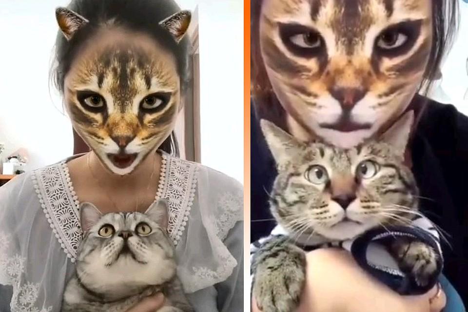 Котам показали котячі фільтри для соцмереж (ВІДЕО)