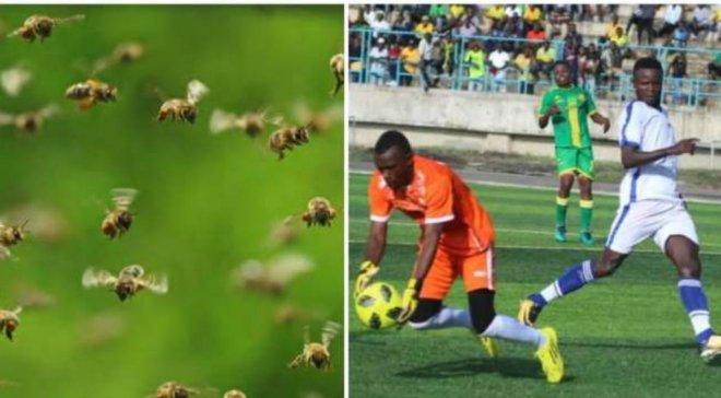 Рій бджіл перервав матч чемпіонату Танзанії (КУМЕДНЕ ВІДЕО)