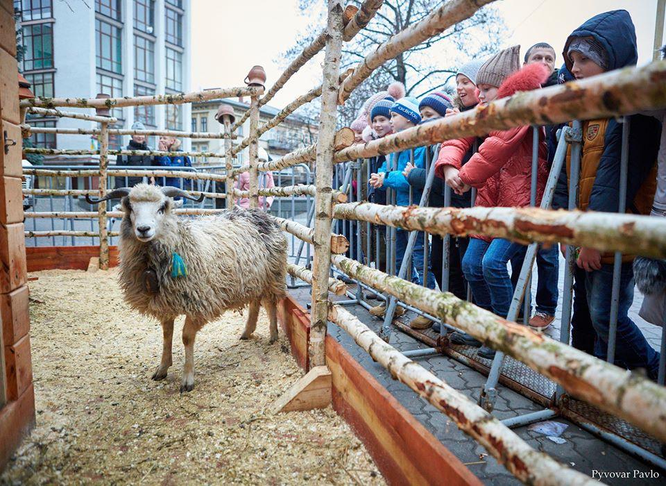 У центрі з'явилася шопка з живими вівцями, але франківці не у захваті від неї
