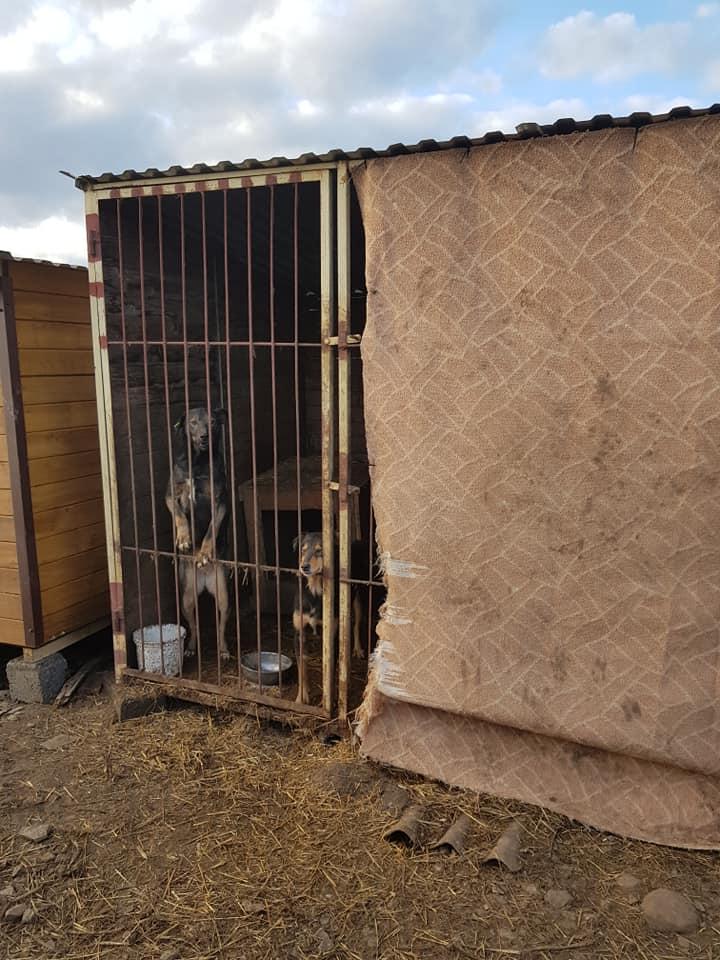 """У """"Дім Сірка"""" потрібні лінолеум і килими, аби захистити тварин від негоди (ФОТО)"""
