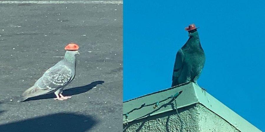 У Лас-Вегасі літають голуби з мініатюрними ковбойськими капелюхами. Всі намагаються зрозуміти, звідки вони взялися (ВІДЕО)