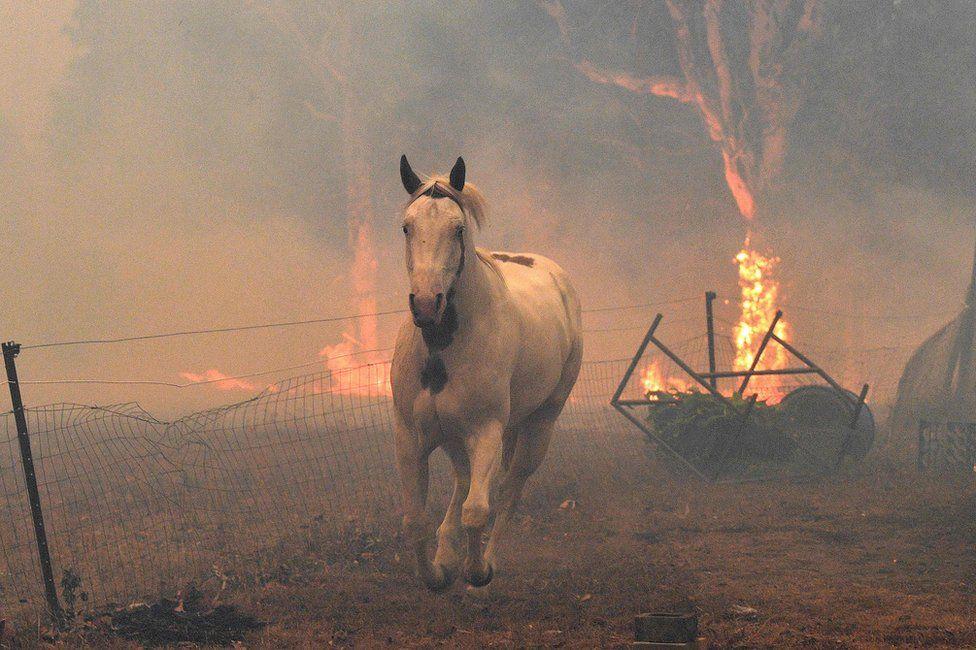 Смертоносні пожежі в Австралії: фото, які вражають
