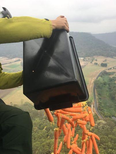 В Австралії з повітря скинули тисячі кілограмів овочів, щоб нагодувати постраждалих від пожеж тварин