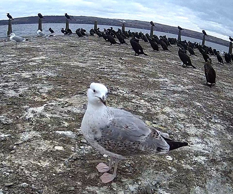 Прикарпатці зможуть спостерігати за дикими птахами в прямому ефірі